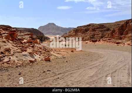 Off road tracks in south Sinai desert, Egypt - Stock Photo