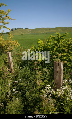 Old wooden fence posts and hedges in Wiltshire countryside with the Cherhill White Horse in the background on a - Stock Photo