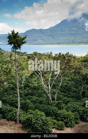 Coffee Finca near San Lucas Toliman Lake Atitlan Guatemala. - Stock Photo