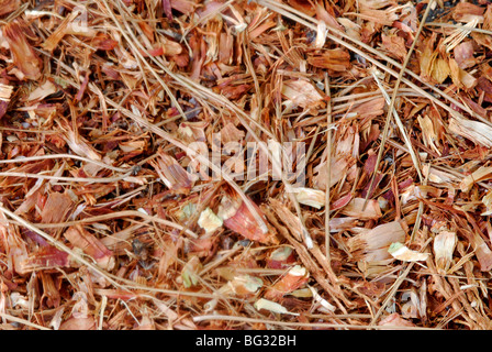 dry pine needles on forest floor stock photo, royalty free image
