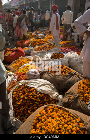 Marigolds tied up in cloth and sacking ready for sale, flower market, Bari Chaupar, Jaipur, Rajasthan, India, Asia - Stock Photo