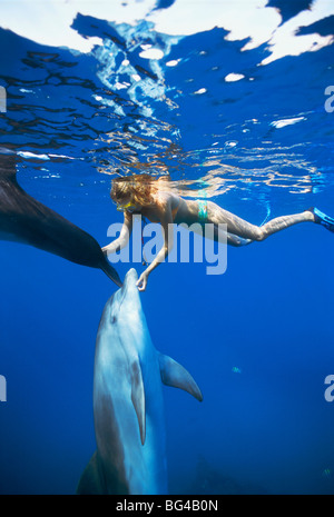 Dolphin trainer scratches Bottlenose Dolphins (Tursiops truncatus) near surface, Dolphin Reef, Eilat, Israel - Red - Stock Photo