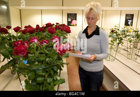 Flower auction in Aalsmeer, a cooperative of 6000 (flower) farmers in The Netherlands - Stock Photo