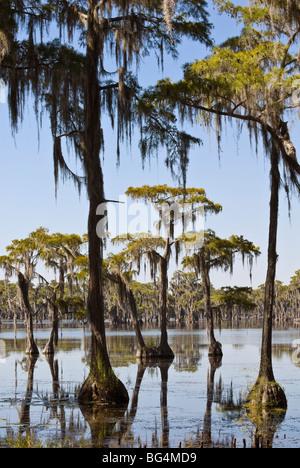 Cypress trees in Southeast Georgia, USA - Stock Photo