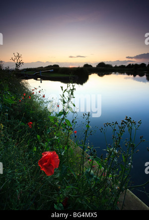 Poppies on the banks of the Kennet and Avon Canal at Caen Hill Locks, near Devizes, Wiltshire - Stock Photo
