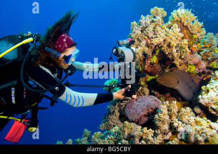 Underwater photographer scuba diving, ras mohammed, Egypt, colorful, moray eel, blue water, tropical reef, scuba, - Stock Photo
