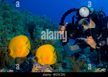Underwater photographer scuba diving, Ras Mohammed, national park, Egypt, diver, tropical reef, fish, colorful, - Stock Photo