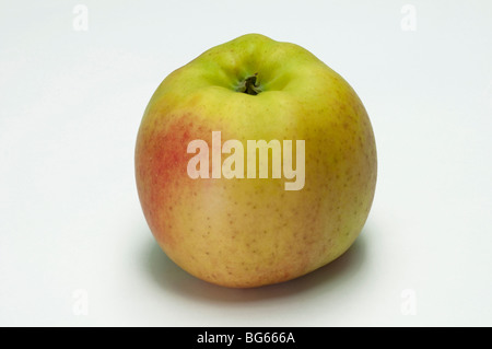 Domestic Apple (Malus domestica), variety: Otava, ripe fruit, studio picture. - Stock Photo