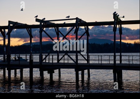 Gulls get ready for night to fall on the boat launch pier on Gooseberry Point, Lummi Indian Reservation, Washington - Stock Photo