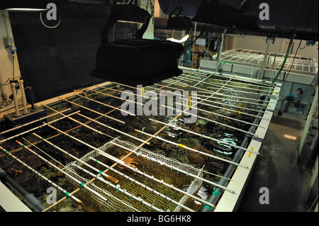 Big nursery tank for coral in the aquarium of Monaco - Stock Photo