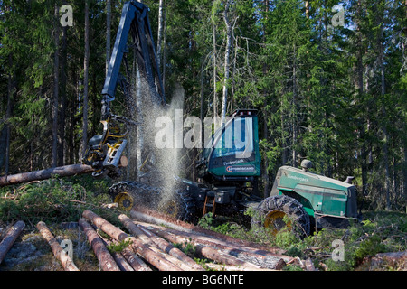 Logging industry showing timber / trees felled by forestry machinery / Timberjack harvester in pine forest - Stock Photo