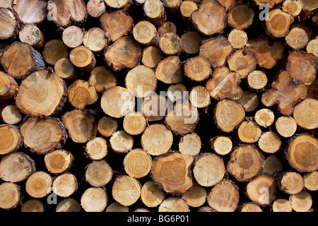 Logging industry showing pile of cut logs / trees / timber from pine forest - Stock Photo