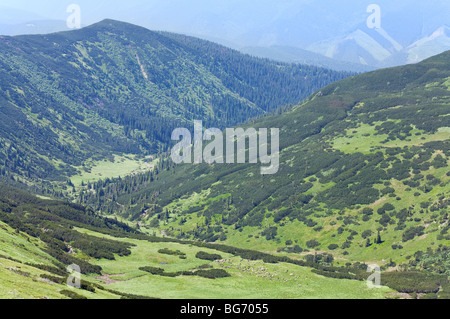 Herd of sheep on green summer mountain pasture (Carpathian Mountains, Ukraine) - Stock Photo