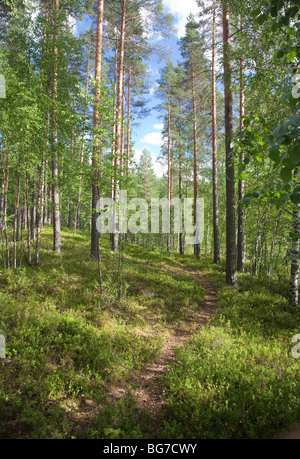 Path in the Finnish pine ( pinus sylvestris ) forest , Finland - Stock Photo