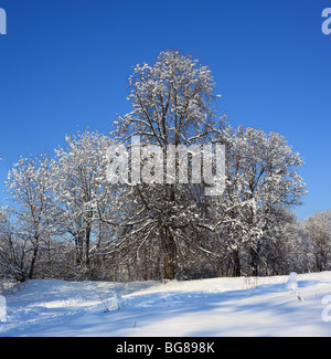 Forest in sunny winter day, Russia - Stock Photo