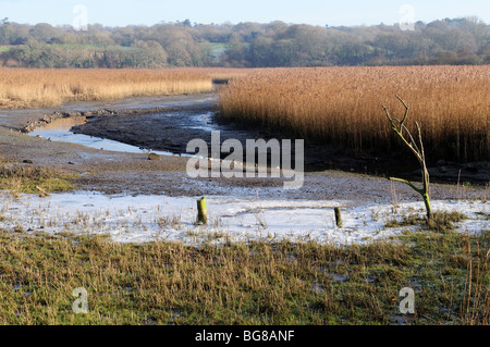 Welsh Wildlife and Wetlands Centre  Cilgerran Cardigan Pembrokeshire Wales Cymru UK - Stock Photo
