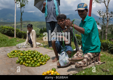 Weighing fruit in India - Stock Photo