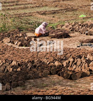Cow dung fuel drying in the sun - Stock Photo