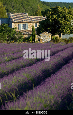 Mas near Banon. Alpes de Haute Provence. - Stock Photo