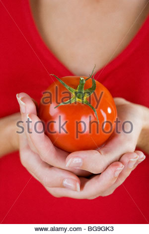 A Woman's Hands Holding A Tomato - Stock Photo