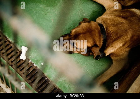 Dog laying on the floor in a cage at a rescue center with a small bone in front of him. - Stock Photo