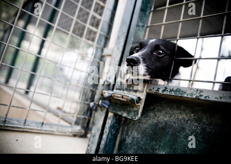 Dog looking out of a cage at a rescue center - Stock Photo