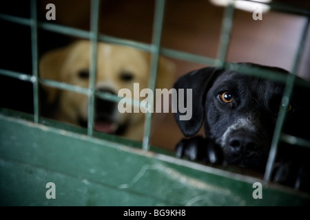 Dog looking out of the cage at a rescue center - Stock Photo