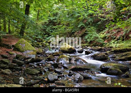 The Birks of Aberfeldy woodland walk taken in early autumn, Perth and Kinross, Scotland Stock Photo