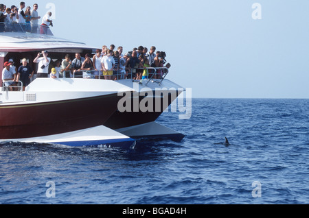 Whale watching vessel with whale watchers during an encounter with a wild short-finned pilot whale, Tenerife - Stock Photo