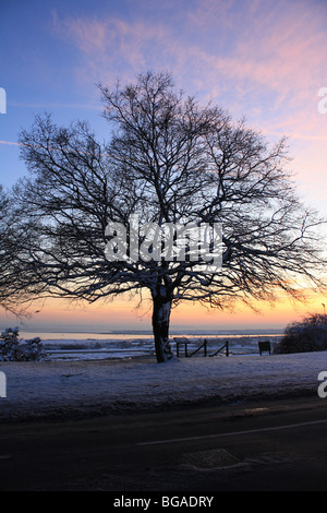 Tree in front of a sunset at Leigh on Sea - Stock Photo
