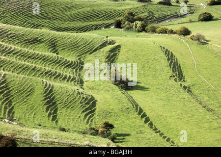 View of terracettes from Westbury White Horse, Wiltshire - Stock Photo