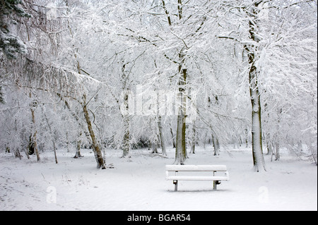 Heavy snowfall in Essex woodland. - Stock Photo
