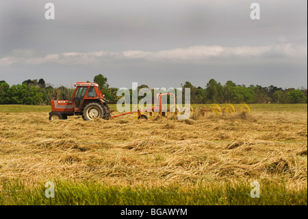 making hay while the sun shines - Stock Photo