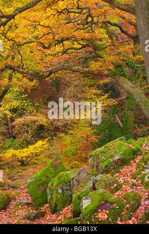 Woodland at Aira Force Ullswater Lake District National Park Cumbria England - Stock Photo