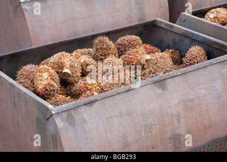 Huge metal containers full of oil palm fresh fruit bunches (FFBs) are lined up to enter the mill. Johor Bahru, Malaysia - Stock Photo