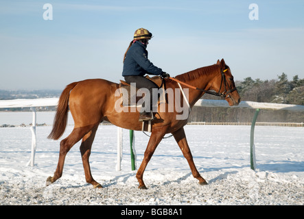 Racehorse and rider in winter snow, Warren Hill training ground, Newmarket, Suffolk, UK - Stock Photo