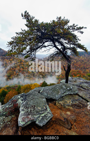 View from Buzzards Roost of Mist Rising and Autumn Color in Fall Creek Falls State Park in Tennessee - Stock Photo