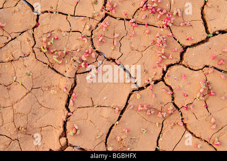 New growth in cracked earth. - Stock Photo