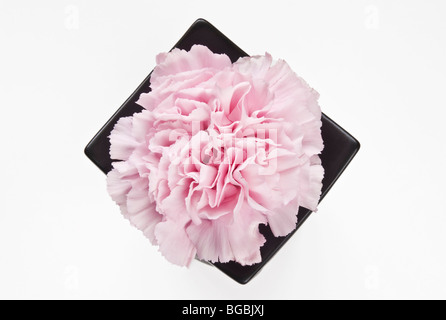 One Pink Carnation topview - Stock Photo