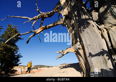 Hiker on the Ramparts Trail, Cedar Breaks National Monument, Dixie National Forest, Brian Head, Utah, USA - Stock Photo