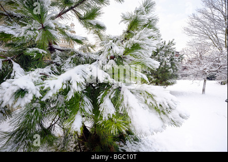 A fir tree covered in snow - Stock Photo