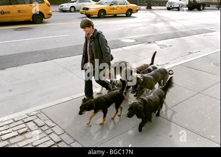 Female walking dogs near Central Park Manhattan New York USA - photo by Simon Dack - Stock Photo