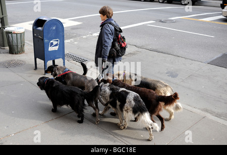 Female walking dogs near Central Park Manhattan New York USA - photo by Simon Dack - Stock Photo