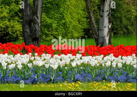 Bed of tulips in Killesbergpark, Stuttgart, Baden-Wuerttemberg, Germany, Europe - Stock Photo