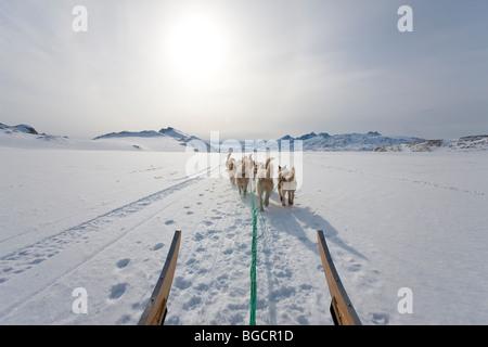 Dog sledding, E. Greenland - Stock Photo