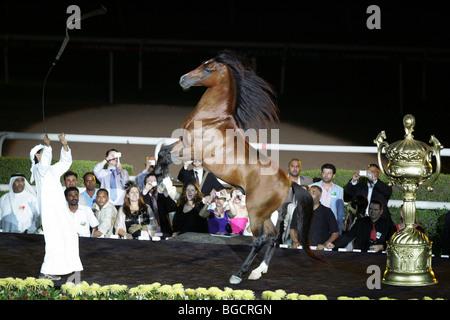 A horse rearing on command, Dubai, United Arab Emirates - Stock Photo