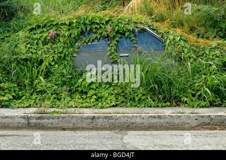Car overgrown with vines and weeds, Christiansted, St. Croix island, U.S. Virgin Islands, United States - Stock Photo