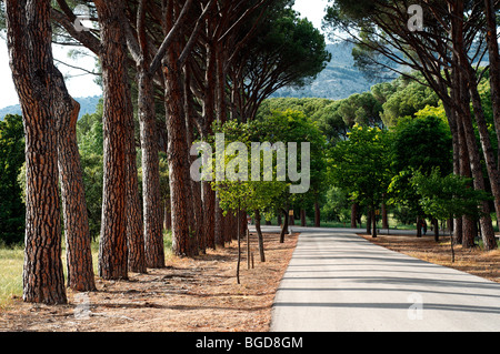 One of the roads leading to El Escorial in Madrid, Spain. UNESCO World Heritage Site. - Stock Photo