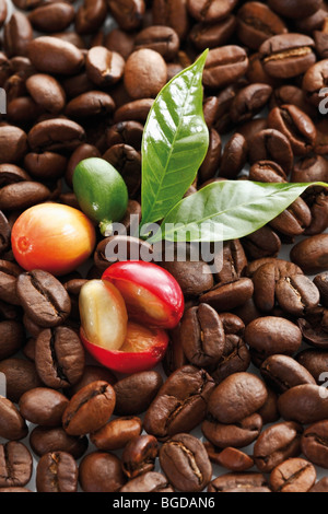 Freshly picked coffee beans on coffee beans at different stages of roasting - Stock Photo