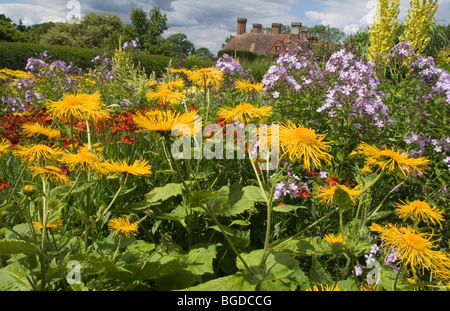 TELEKIA SPECIOSA FLOWERS AT GREAT DIXTER GARDENS, EAST SUSSEX. - Stock Photo
